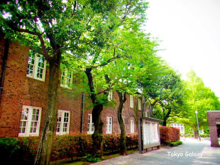 릿쿄대학 대학원 MBA 과정 합격후기